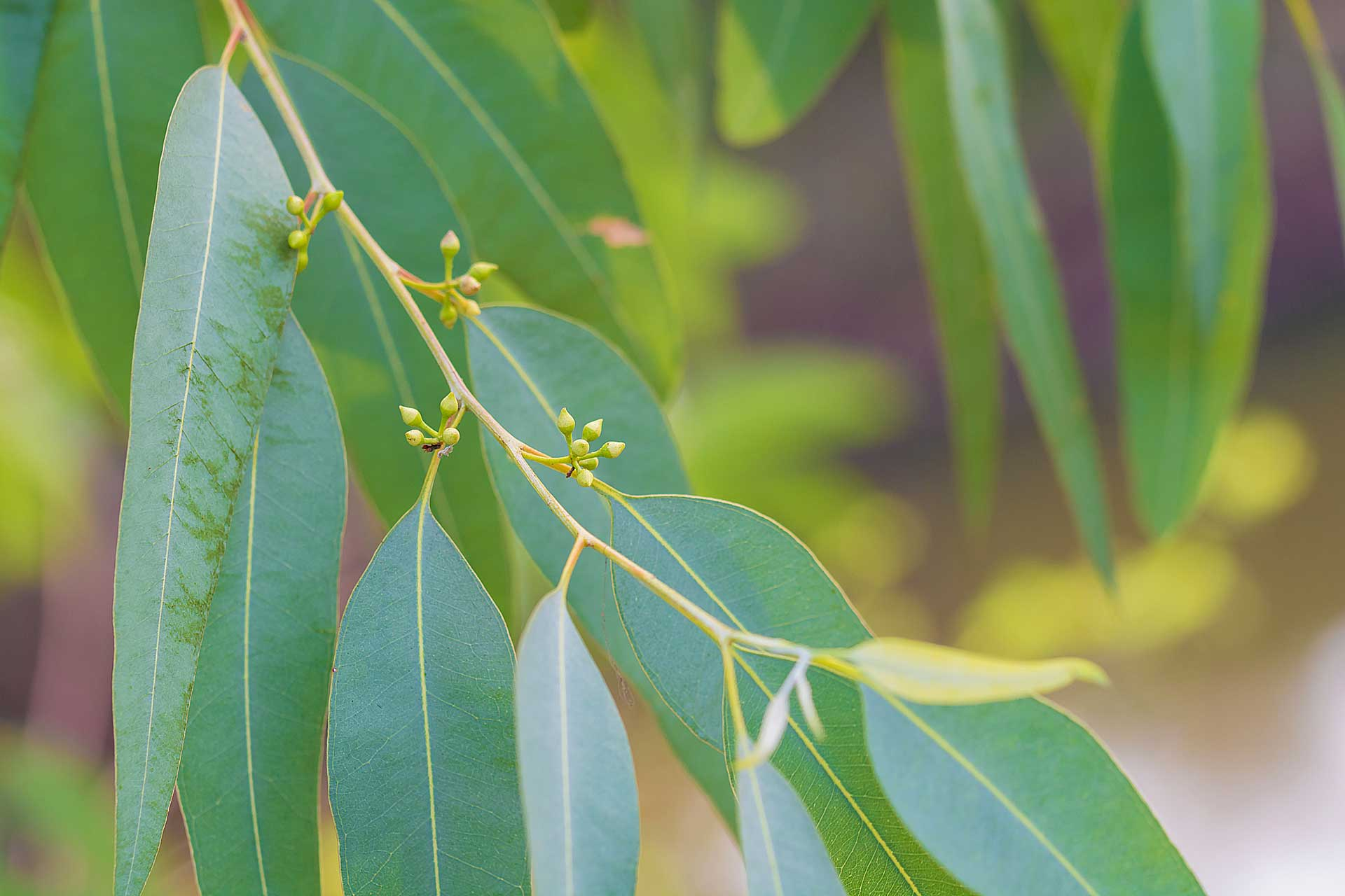 contact-page-eucalypt-leaves