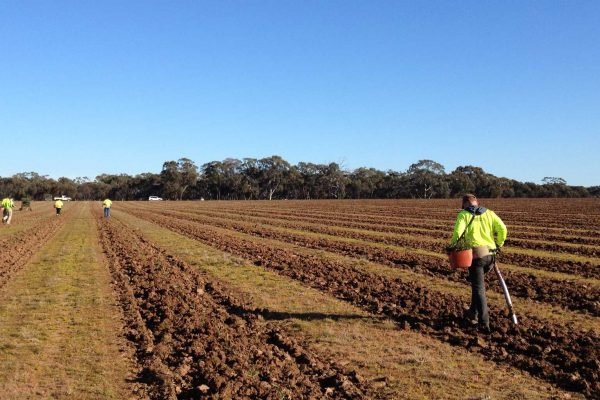 Planting---2012